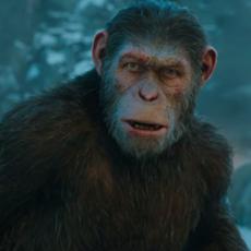"""Nouvelles images de """"La Planète des Singes - Suprématie"""" avec le dernier trailer bien guerrier"""