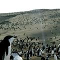 BBC's Planet Earth II : 10 ans après la première saison